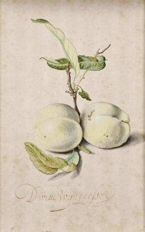 prunas persas by balthasar van der ast