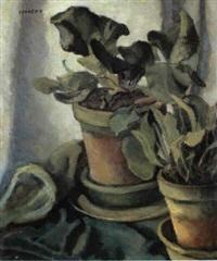 piantine nei vasi coccio by emilio sobrero