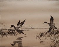 pair of pintails (paff 294) by frank benson