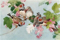 zebra finches by winifred marie louise austen