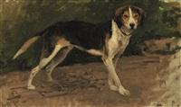 cane nero e giallo by eugenio cecconi