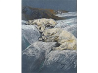 polar bears asleep on the ice by arthur wardle