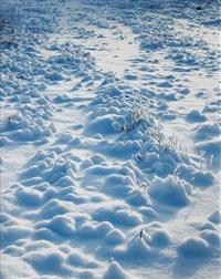 white field by torbjørn rødland