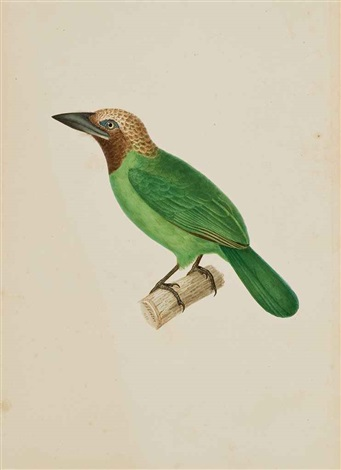 barbu corbin dit bucco corvinus by jean gabriel prêtre