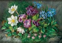 alpenblumen by marie kartsch