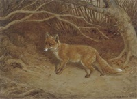 the wily fox by frank paton