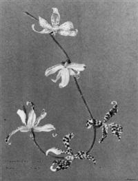verschiedene orchideen arten
