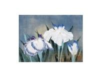 iris by oya toshihiko