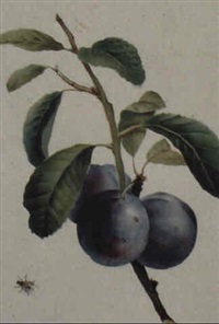 still life with plums by grigory gagarin