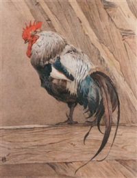 an old dorking cockerel by winifred marie louise austen