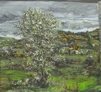 whitethorn field with sheep by nick miller
