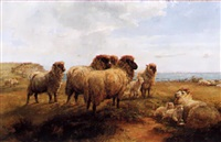 sheep resting on a cliff by walter henry pigott
