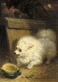 weißer yorkshire terrier