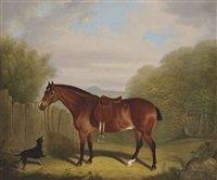 a favourite chestnut hunter by clifton tomson