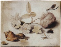 study of flowers, insects and shells by margarethe de heer
