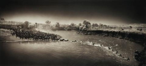 zebra river crossing massai mara by nick brandt