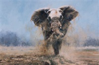 the spirit of freedom - elephant by paul apps