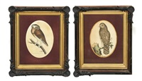 untitled (owl) (+ another; 2 works) by frederick p. nodder