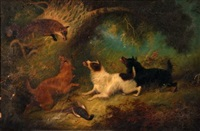 terriers with fox by armfield
