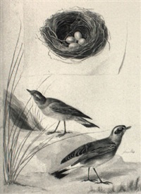 wheaters and a trompe l'oeil of a nest with eggs by jabes heenck