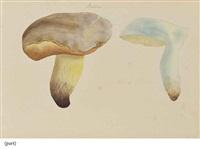 étude de champignons: bolets; et étude de champignons: amanites et russules (pair) by jean-henri fabre