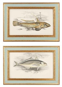 fish (+ 23 others; 24 works from a history of the fishes of the british isles) by jonathan couch