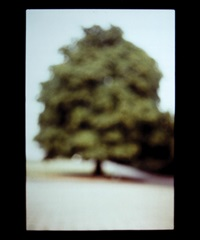 tree, potsdam by david armstrong