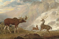 the earl of orford's elk from norway by george garrard