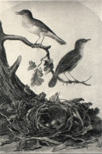 nightingales and a nest with eggs by jabes heenck