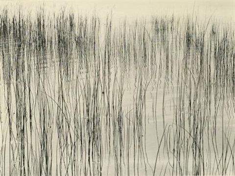 detroit grasses by harry callahan