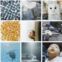 aila (9 works) by rinko kawauchi