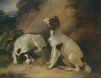 two springer spaniels in a rocky landscape by richard livesay