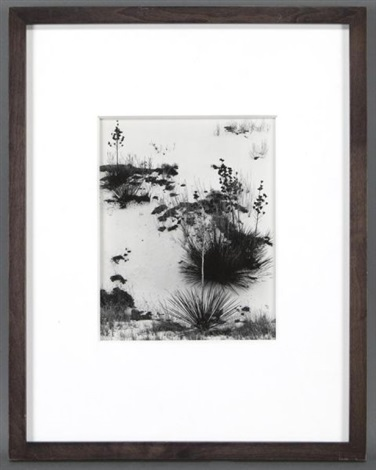 white sands from the white sands portfolio by brett weston
