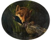 renard saisissant un col vert by oliver pichat