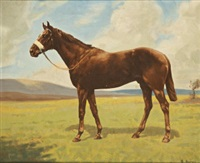 thirteen of diamonds, winner of irish derby, blanford star by h. harris