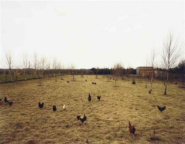 hühner, krefeld by andreas gursky