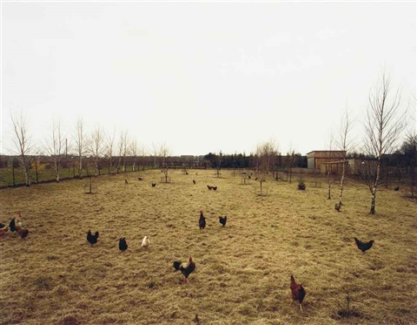 hühner krefeld by andreas gursky