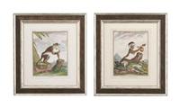 monkeys (12 works) by georges louis leclerc buffon