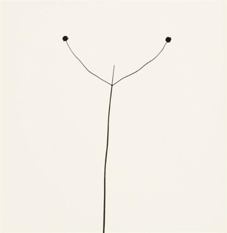 weed against sky by harry callahan