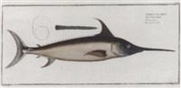 game fish studies by johann friedrich hennig