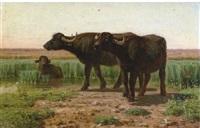 bufali nella campagna by simone campanile