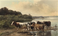 cows on the embankment by jan bedijs tom