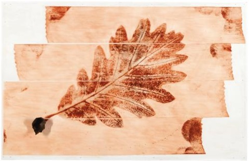 foglie del cervello quercia by giuseppe penone