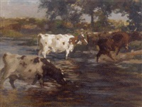 cattle fording a river by andrew douglas
