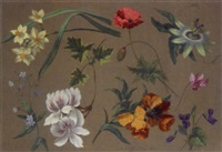 flower studies by adolf (carl) senff