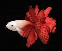 goldfish by yoshimasa tsuchiya