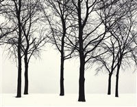 chicago (trees in snow) by harry callahan