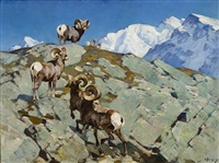 alarmed (big horn rocky mountain sheep) by carl clemens moritz rungius