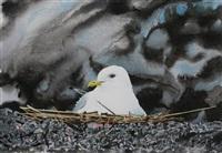 mouette au nid by christian dache