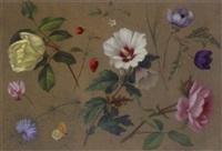 flower studies by adolf (carl) senff